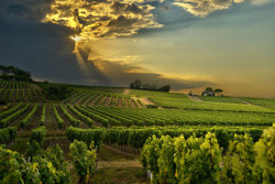 Bergerac vineyards