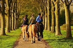 Three women horse riding