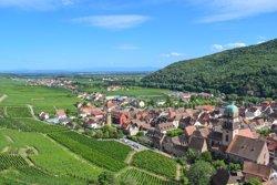 Vineyards of Kaysersberg