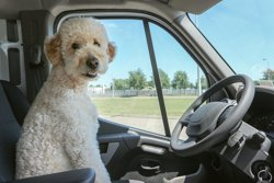 Taking Your Dog on a Motorhome Holiday
